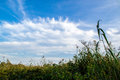 Panorama in the reeds reed bed italy verbania lake maggiore Royalty Free Stock Images