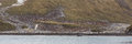Panorama of right whale bay and thousands of king penguins young oakum boys Stock Photo