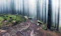 Panorama of rocky path through old foggy forest Royalty Free Stock Photo