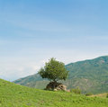 Panorama of single tree and mountains in Georgia Royalty Free Stock Photo