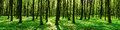 Panorama of spring forest nature background Royalty Free Stock Image