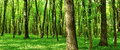 Panorama of summer forest nature background Stock Photo