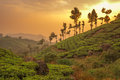 Panorama tea plantations munnar kerala india Royalty Free Stock Images