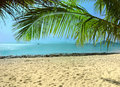 Panorama of tropical beach with palm Stock Images