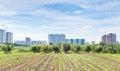 Panorama of urban garden Royalty Free Stock Photo