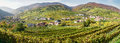 Panorama of vine hills taken in wachau lower austria Stock Images