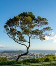 Panorama of Waikiki and Honolulu from Tantalus Overlook on Oahu Royalty Free Stock Photo