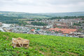 Panorama of whitby a view over town and harbor looking inland north Royalty Free Stock Images