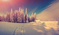 Panorama of the winter sunrise in the forest Royalty Free Stock Photo