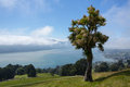 Panoramic landscape otago bay dunedin cabbage tree frames broad of the peninsula and near the city of and clouds hanging over the Royalty Free Stock Photos