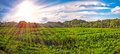 Panoramic sunrise sunset beautiful green meadow farmland with trees forest in the background Stock Image