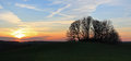 Panoramic sunset hill with trees landscape Stock Photos