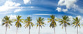 Panoramic view of palms and cloudscape. Royalty Free Stock Photo