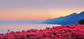 Panoramic view of Recco with pink sunset Royalty Free Stock Photo