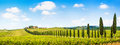 Panoramic view of scenic Tuscany landscape with vineyard in the Chianti region, Tuscany, Italy Royalty Free Stock Photo