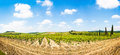 Panoramic view of scenic tuscany landscape with vineyard in the chianti region tuscany italy Royalty Free Stock Photos