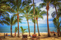 Panoramic view of tropical beach with coconut palm trees Royalty Free Stock Photo