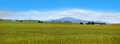 Panoramic view of wheat fields in montana Royalty Free Stock Image
