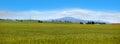 Wheat fields in Montana Royalty Free Stock Photo