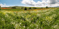 Panoramic view on a wildflower field in the rolling hills of tuscany near pienza italy Stock Photography