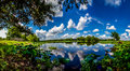 A Panoramic Wide Angle Shot of a Beautiful Lake with Summer Yellow Lotus Lilies, Blue Skies, White Clouds, and Green Foliage Royalty Free Stock Photo