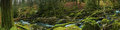 Panoramic wide view on ancient forest woodland in Devon, UK