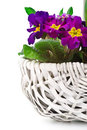 Pansies in a basket Stock Image
