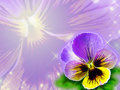 Pansies close up flower background with hotspots Royalty Free Stock Photography