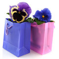 Pansy in bag Stock Images