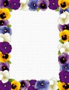 Pansy Flower Frame, Polka Dot Background Stock Images