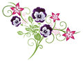 Pansy flowers beautiful summer pink and purple Stock Photos