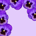 Pansy frame the flower background in violet Royalty Free Stock Image