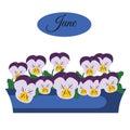 Pansy indoor and garden flowers in pot. Calendar design element, june banner