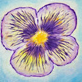Pansy painting Stock Photo