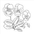 Pansy sketch black and white vector illustration Stock Images
