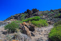Pantelleria view of tipycal countryside in island sicily Royalty Free Stock Photos
