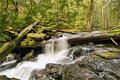 Panther Creek Falls Royalty Free Stock Photography