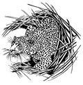 Panther illustration art vector animals wild Stock Photography
