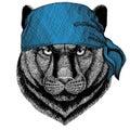 Panther Puma Cougar Wild cat Wild animal wearing bandana or kerchief or bandanna Image for Pirate Seaman Sailor Biker