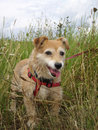 Cute dog in long grass Royalty Free Stock Photo