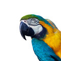 Papagay with copyspace red macaw isolated Stock Photos