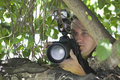 Paparazzi photographer behind tree closeup of a hiding Stock Photography