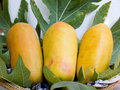 Papaya the tropical fruit that can be eaten both raw and riped Royalty Free Stock Photos