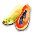 Papaya watercolor illustration of fruit Royalty Free Stock Images