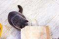 A paper bag for playing hide and seek with a cat Royalty Free Stock Photo