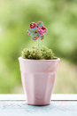 Paper flower in a pot on green background Royalty Free Stock Image