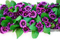 Paper flowers purple on a white background Royalty Free Stock Photos