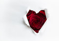 Paper heart and red roses Royalty Free Stock Photo