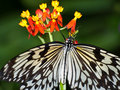 Paper Kite Butterfly feeding Royalty Free Stock Photo