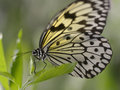 Paper kite butterfly on leaf Royalty Free Stock Photo